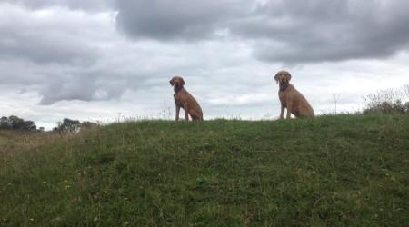 Charlotte Watson's Dog Walking Services
